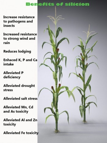 effects of plant growth 1 introduction salinity is the major environmental factor limiting plant growth and productivity (allakhverdiev et al, 2000b) the detrimental effects of high salinity on plants can be observed at the whole-plant level as the death of plants and/or decreases in productivity.