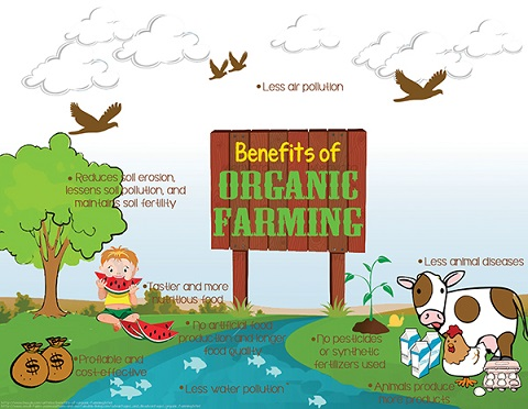 Are Conventional Farmers Becoming Interested in Organic